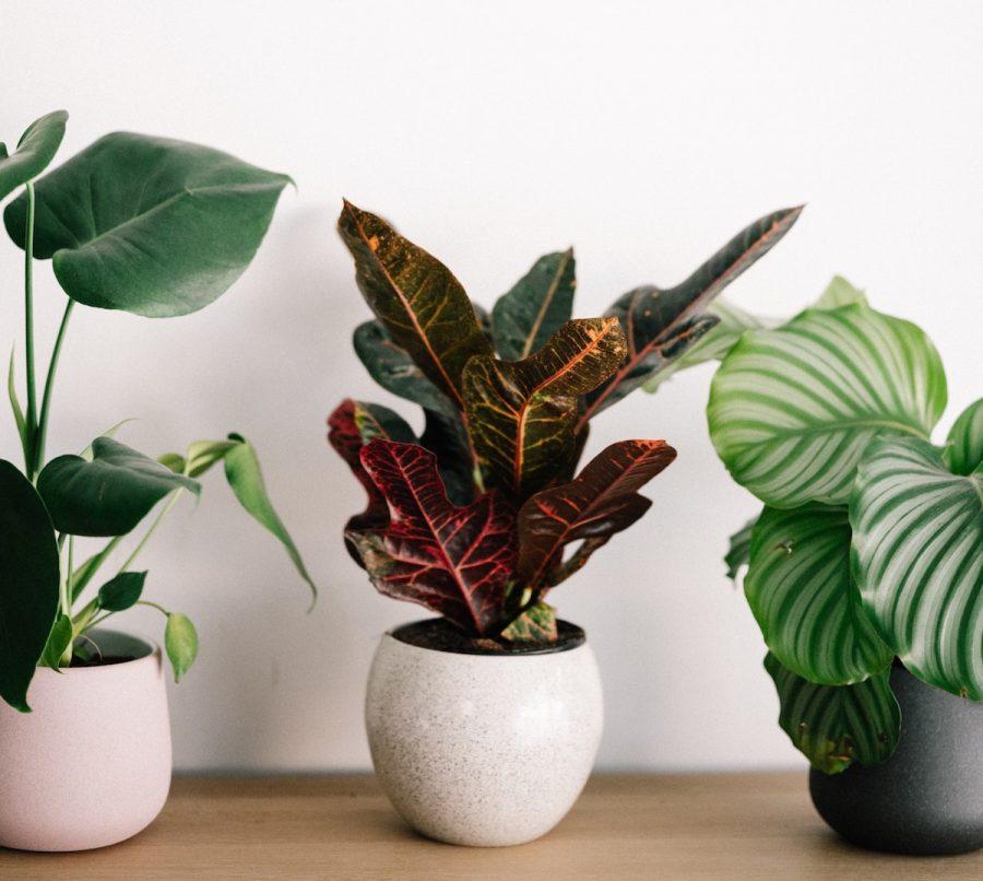 Larry Hodgson : Préparez vos plantes d'intérieur pour l'hiver