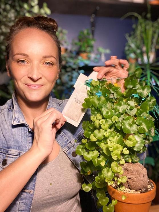 Lady Bug : Faites la lutte aux ravageurs dans vos plantes de façon biologique!