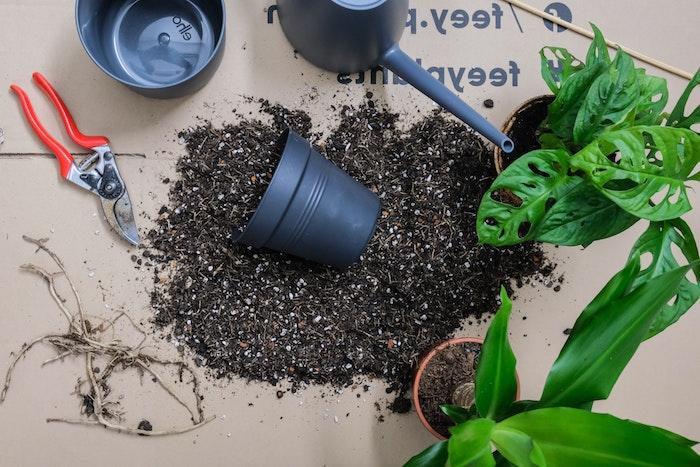 Rempoter votre plante en 10 étapes