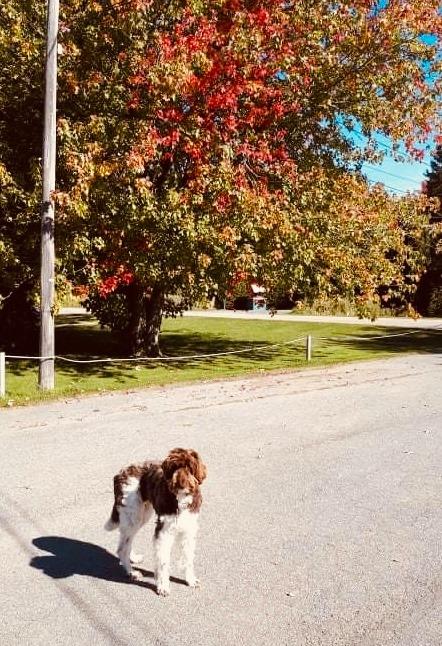 marche à l'automne